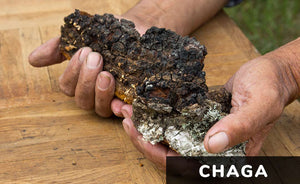 6 Reasons to Take Chaga Mushroom Extract to Complete Your Diet