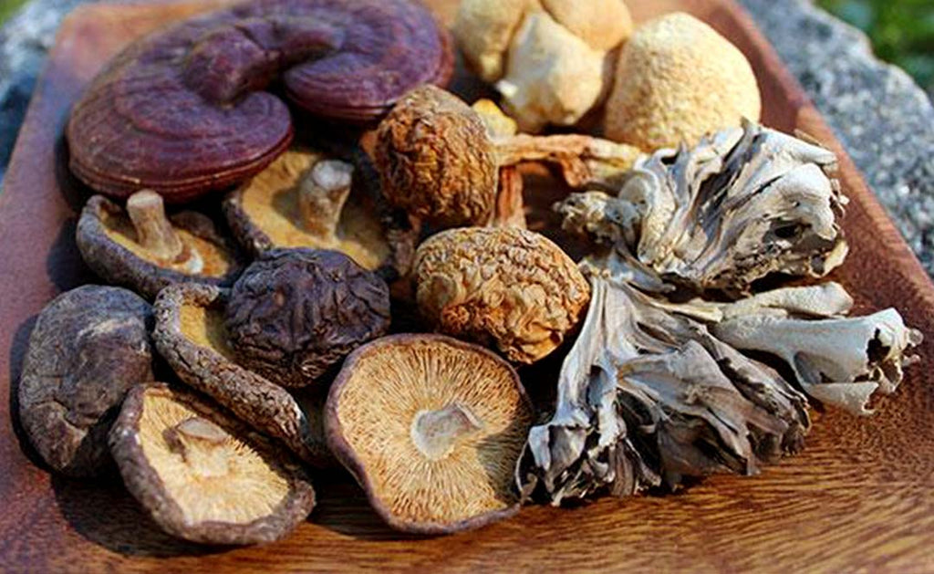 Top 7 Benefits of Medicinal Mushrooms — and How to Use Them