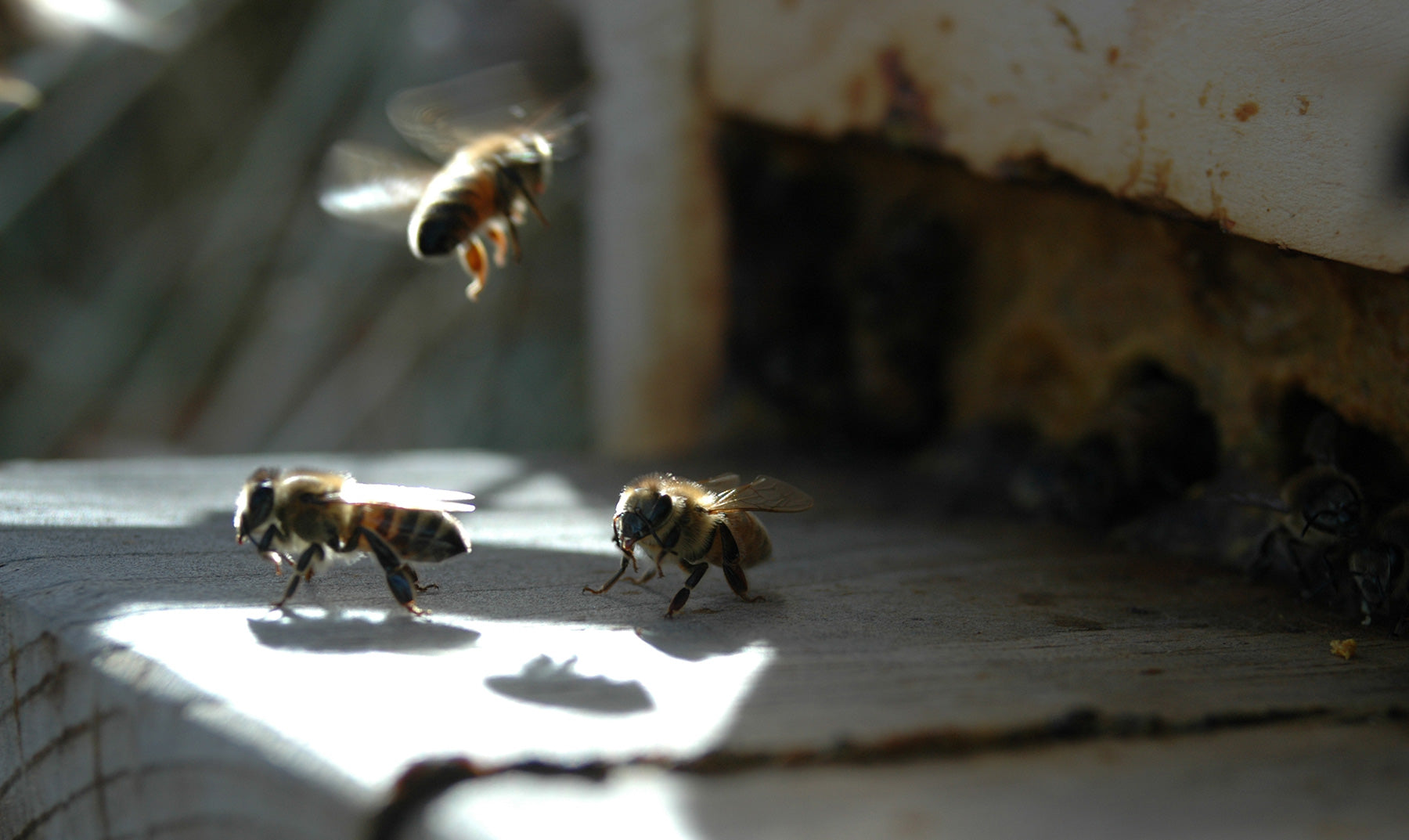 The Buzz About Bee Apitherapy