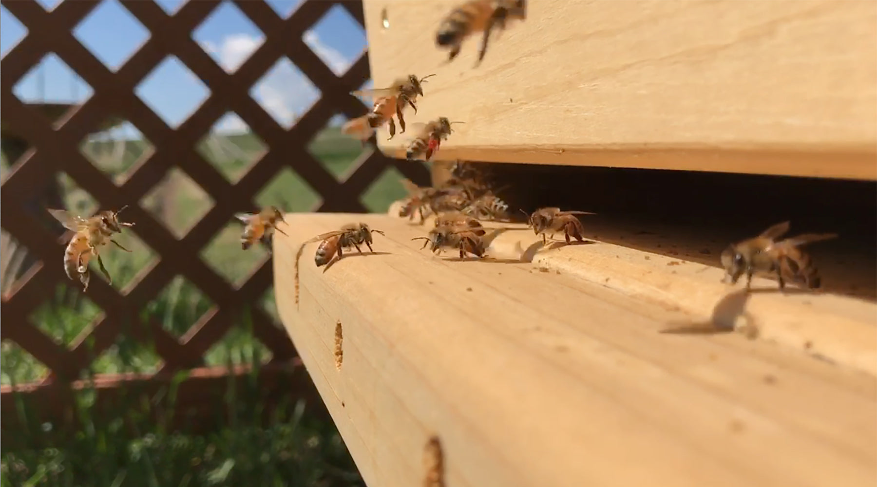 What are the types of bees in a colony or bee hive