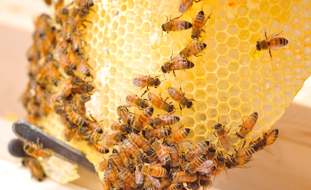The Benefits of Beekeeping