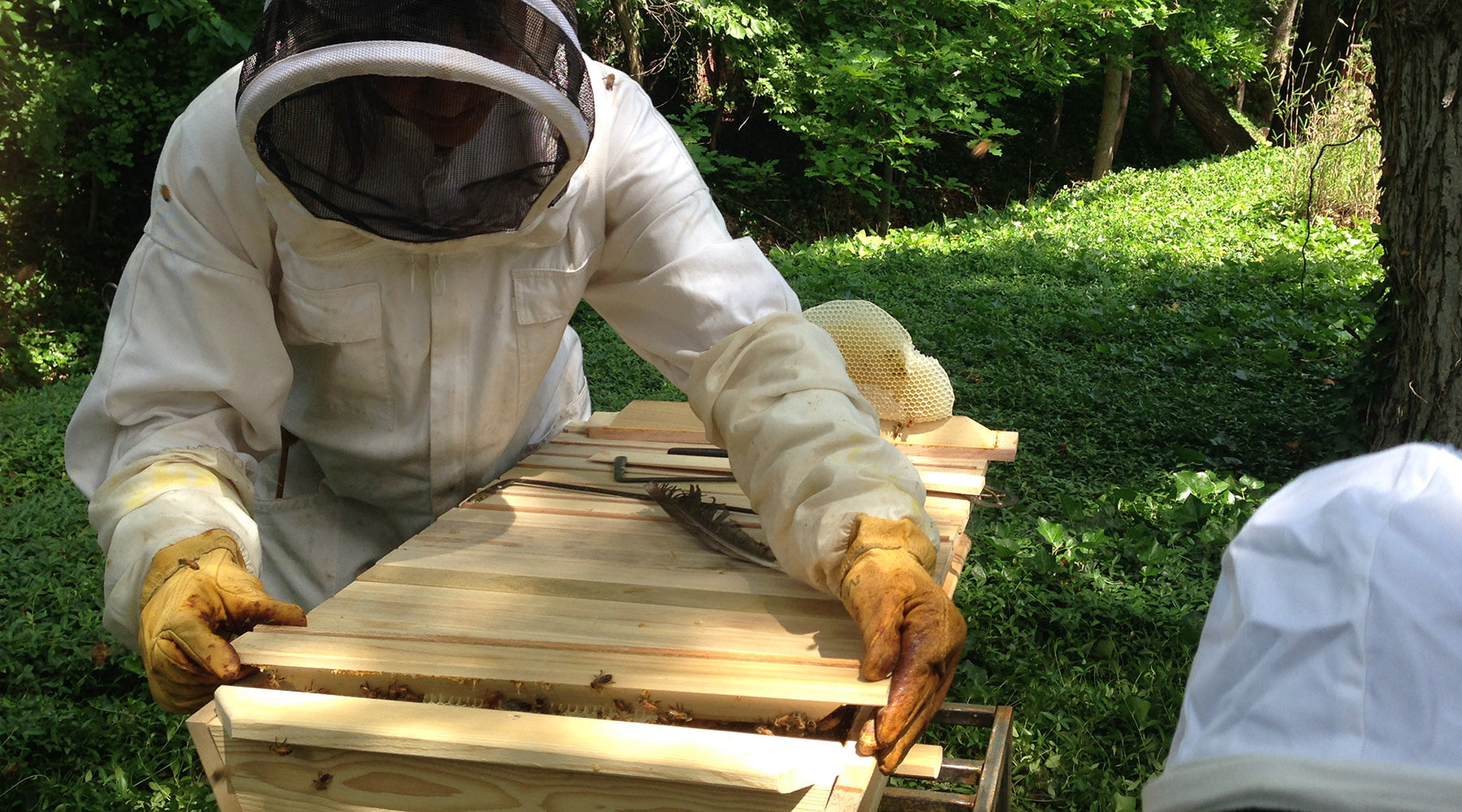 why-top-bar-hives-pulling-comb