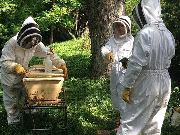 Bee-Doctor-Intensives-Bee-Guardians-working-hive
