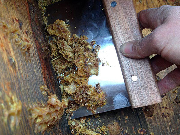Bee-Hive-Scraping-Shovel-Tool-Harvesting-Propolis from top-bar