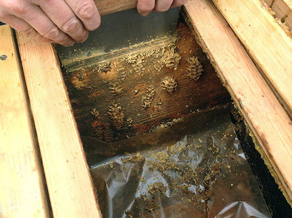 Bee-Hive-Scraping-Shovel-Tool-Harvesting-Propolis-side of hive