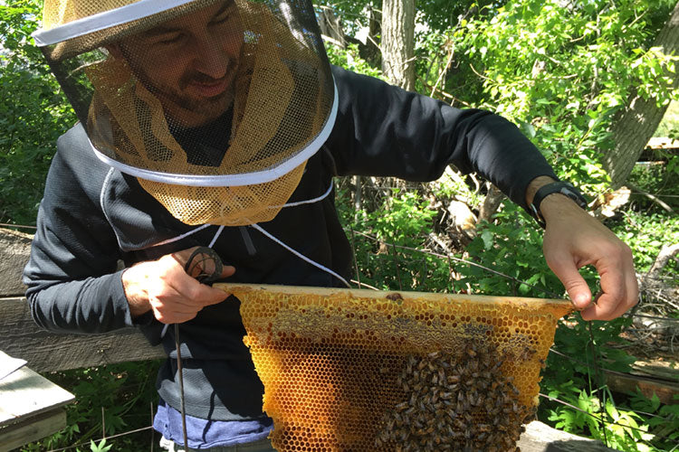 Bee Doctor Intnesives Brinton inspecting brood comb learn Beekeeping