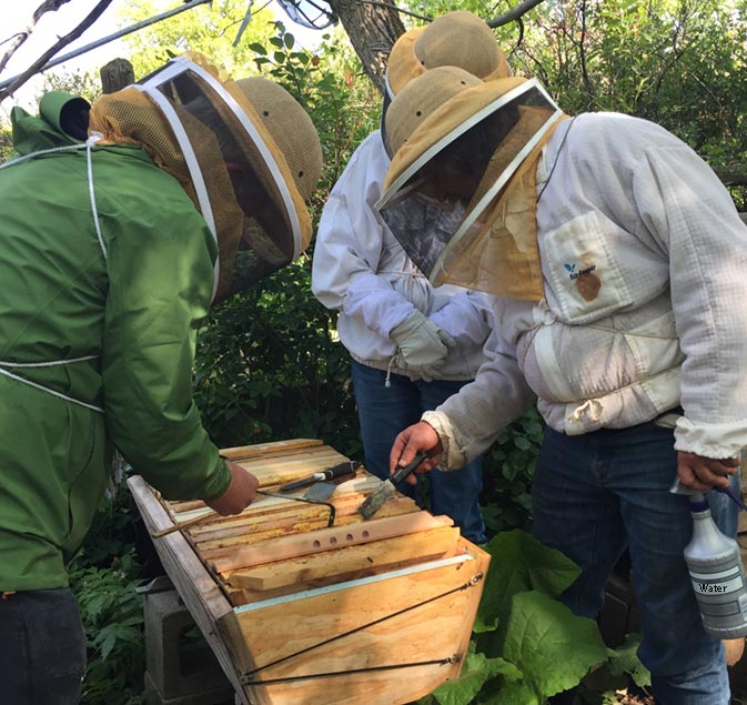 Bee Doctor Intensives with Corwin Bell learn natural beekeeping