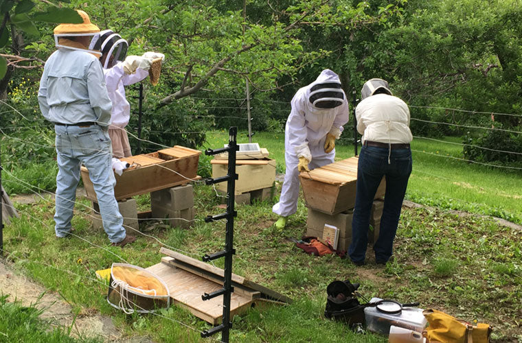 Bee Doctor Intnesives with Corwin Bell Bee Guardians inspecting hives