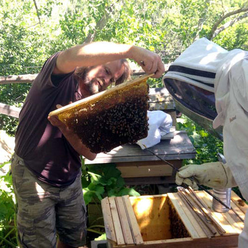 learn beginning beekeeping