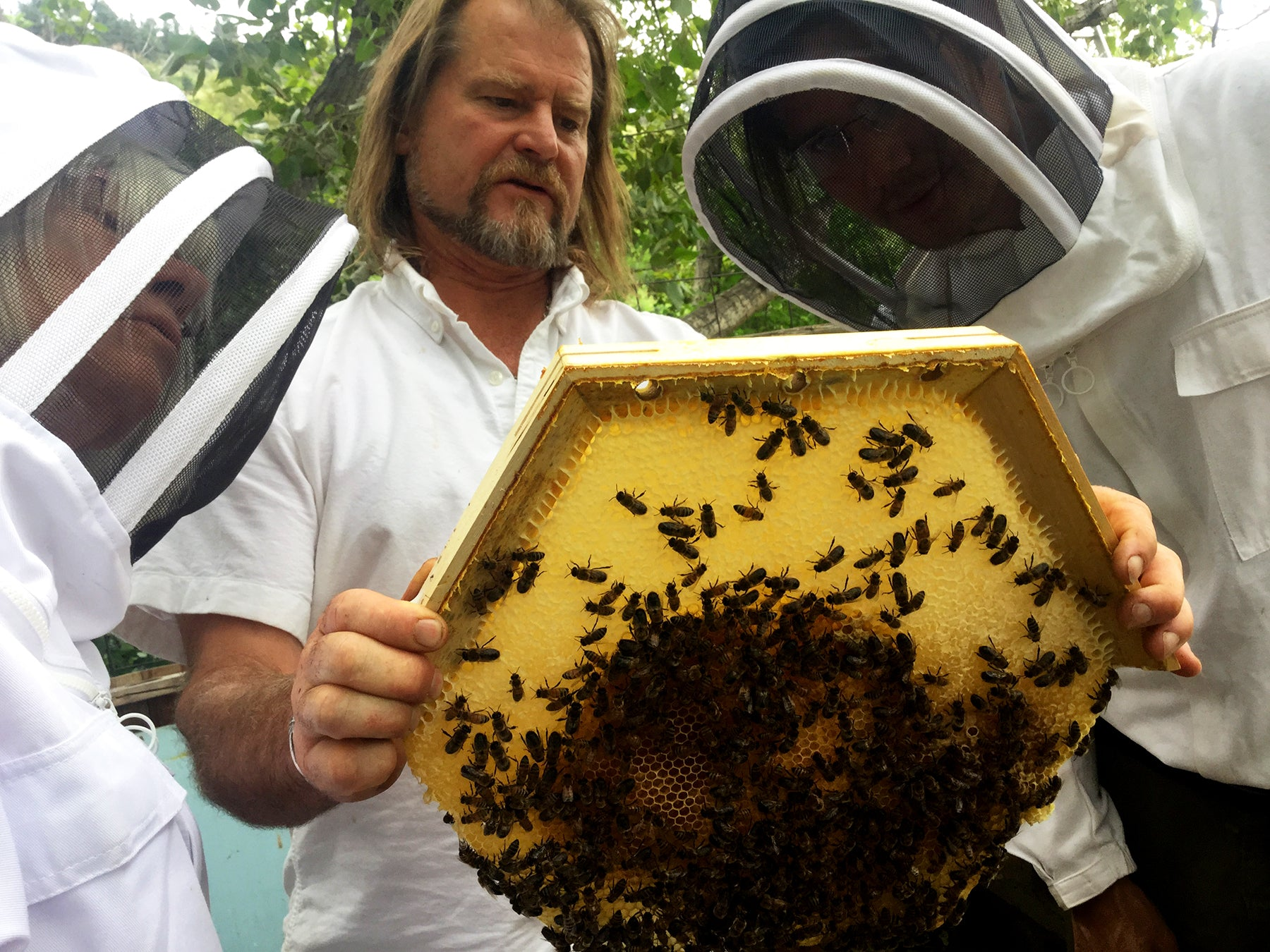 Corwin Bell and Bee gurdian beekeepers inpsecing a Cathedral Hive brood comb