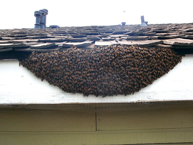 Honey-Bee-Swarm-Removal-Soffit-Siding-Gutter
