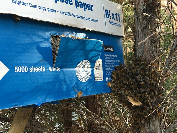 Honey-Bee-Swarm-Removal-box-bees