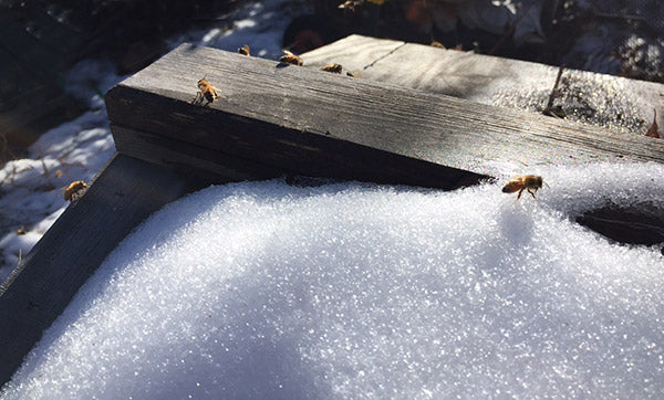 Honeybees-Winter-Warm-Day-Gone-snow