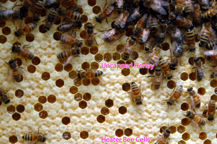 Honeycomb_Brood_Comb_Heater_Bee_Cells