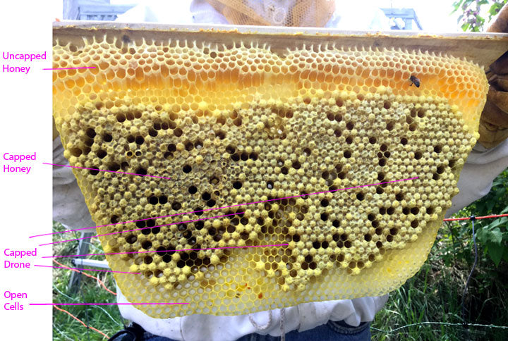 Honeycomb_New_Capped_Drone_Comb