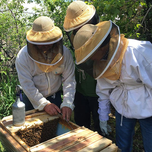 learn managing your top bar hive, inspecting the hive