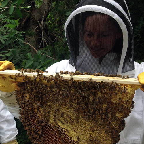 is beekeeping for me? beginning with bees