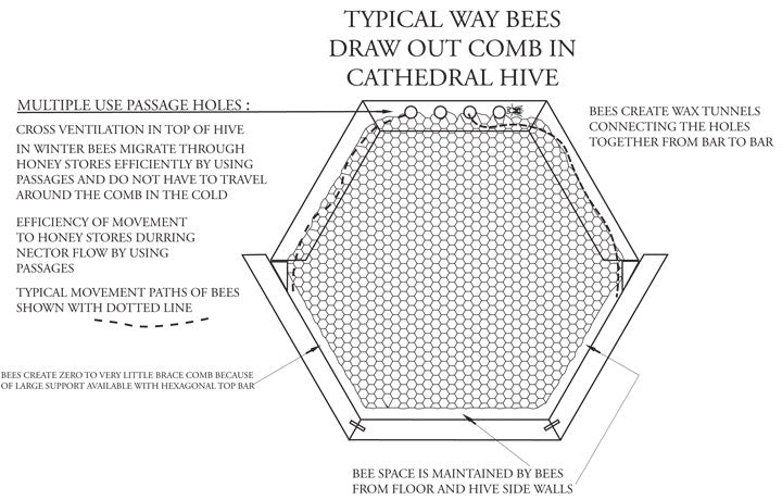 Cathedral Hive Passage Bars