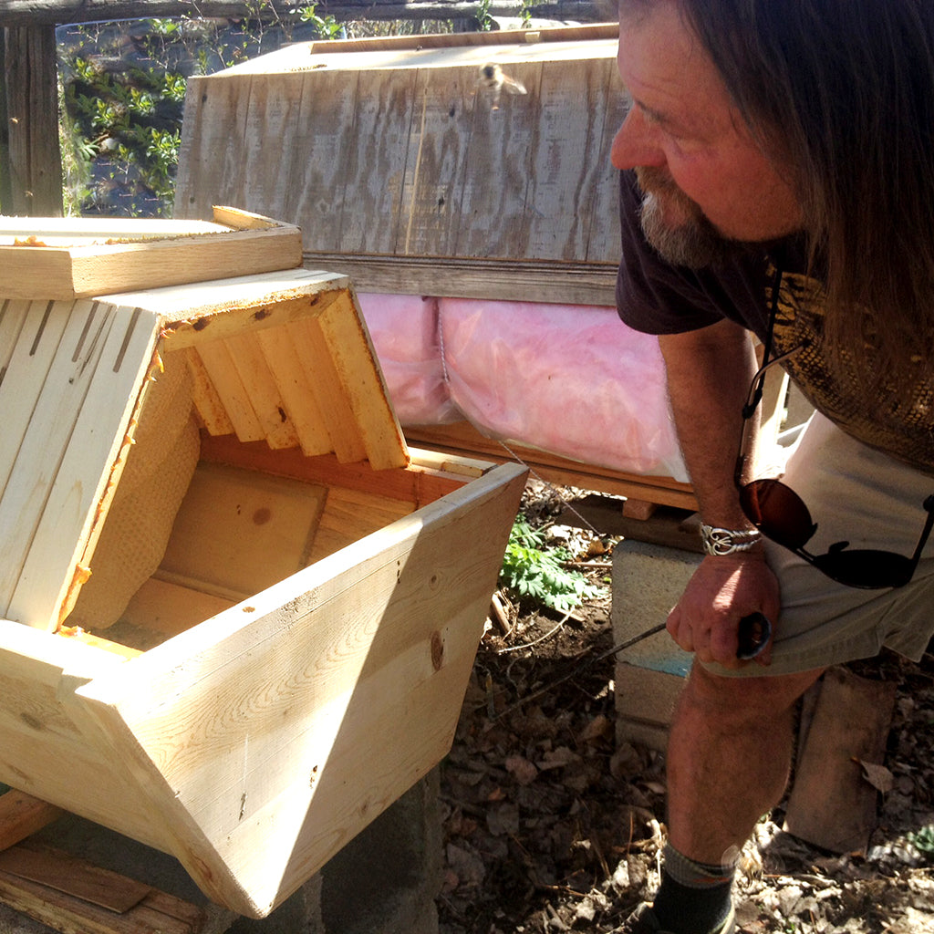 Corwin Bell designer of The Cathedral Hive looking into the bee hive