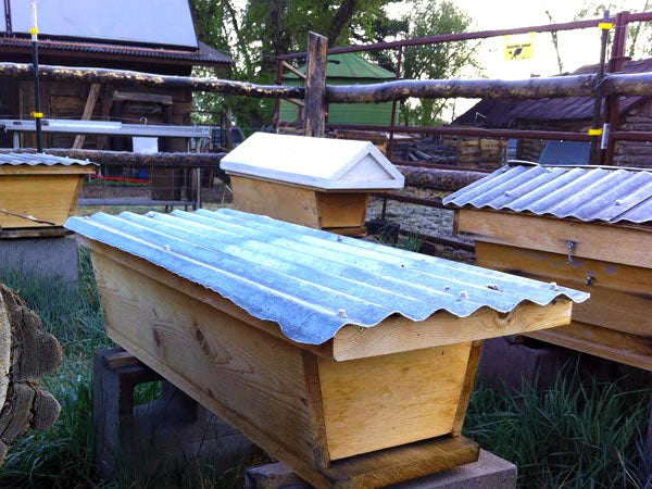 Top-Bar-Hive-apiary