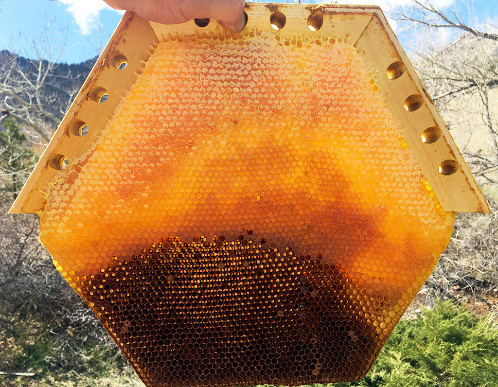 cathedrral-hive-comb-honey-brood