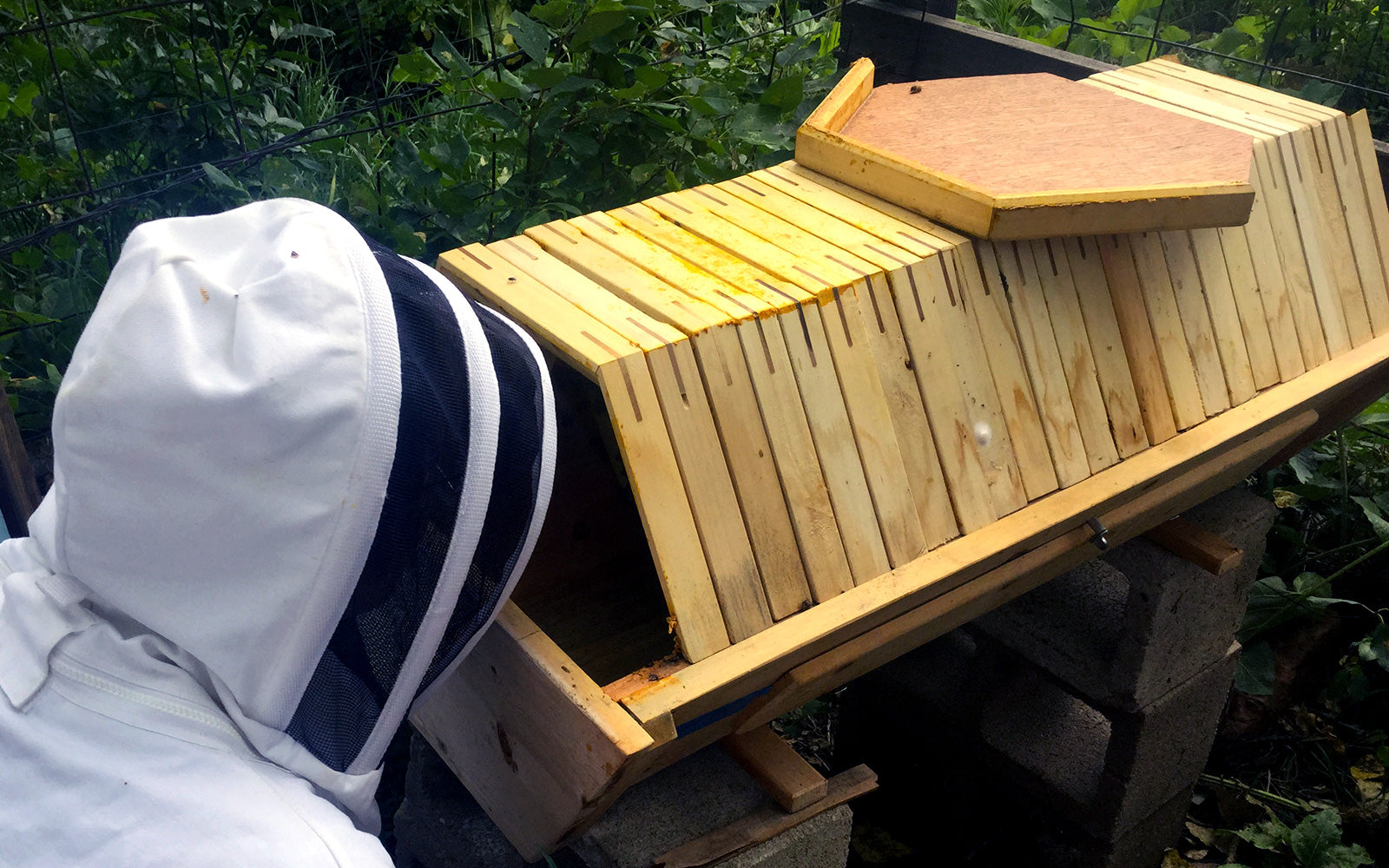 the Cathedral Hive Bee Guardian Viewing Combs