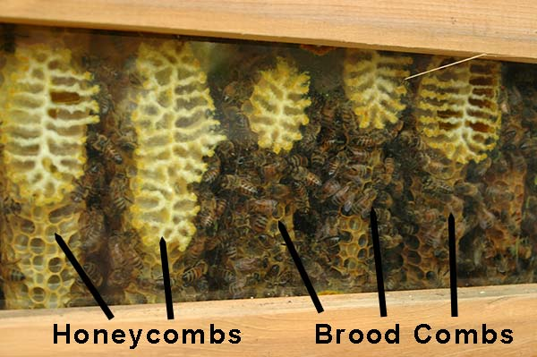 honey comb and brood comb placing spacers