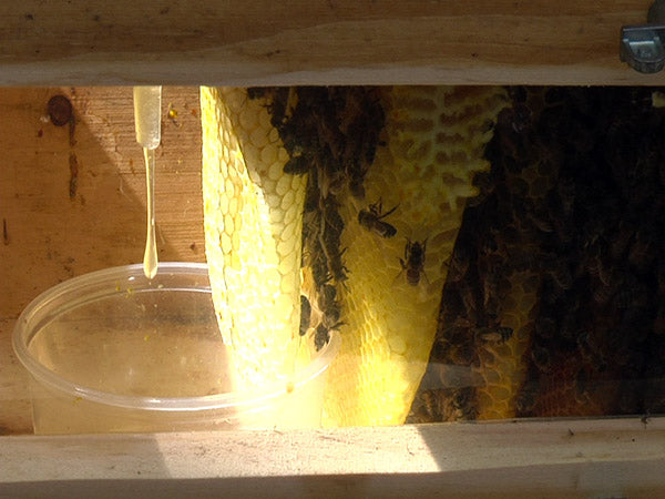 install a feeder cup inside your hive for winter feeding