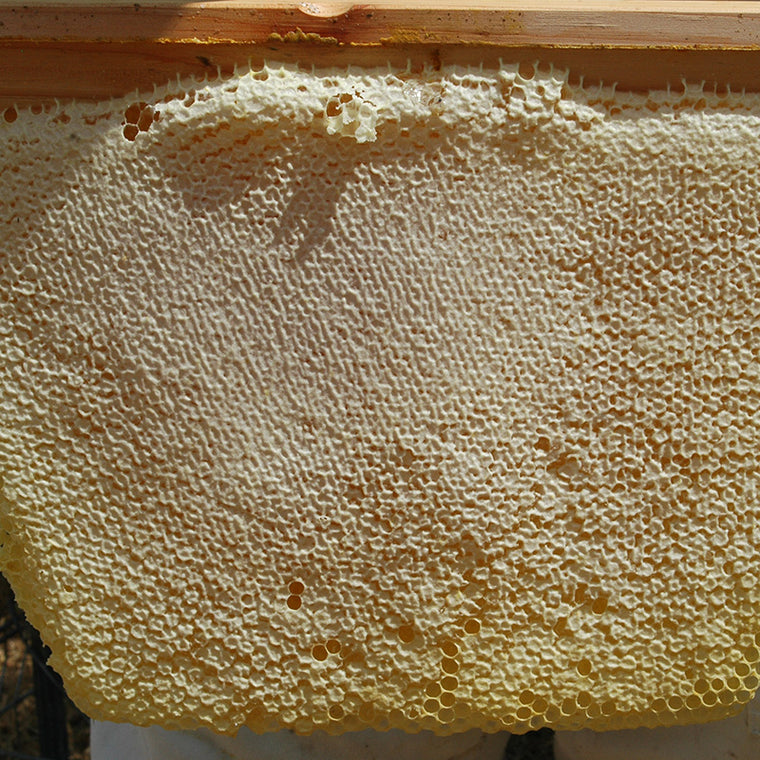 Beautiful fully capped honey comb from the Golden Mean Hive