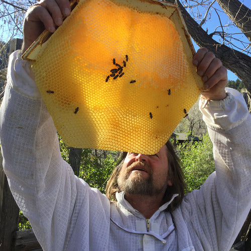 managing your cathedral hive , corwin holding hexagonal honey comb