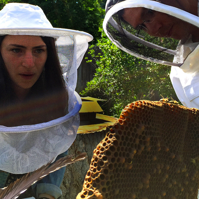Natural Beekeeping Classes