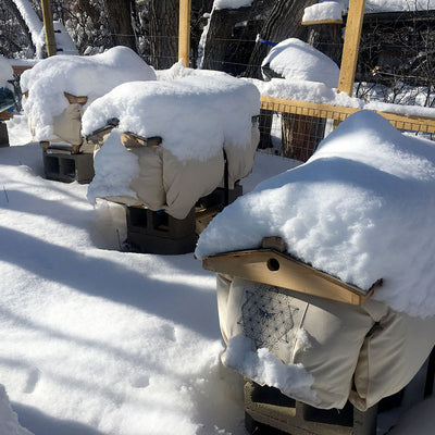 Beehive Cozy Cover 3 hives protected from snow