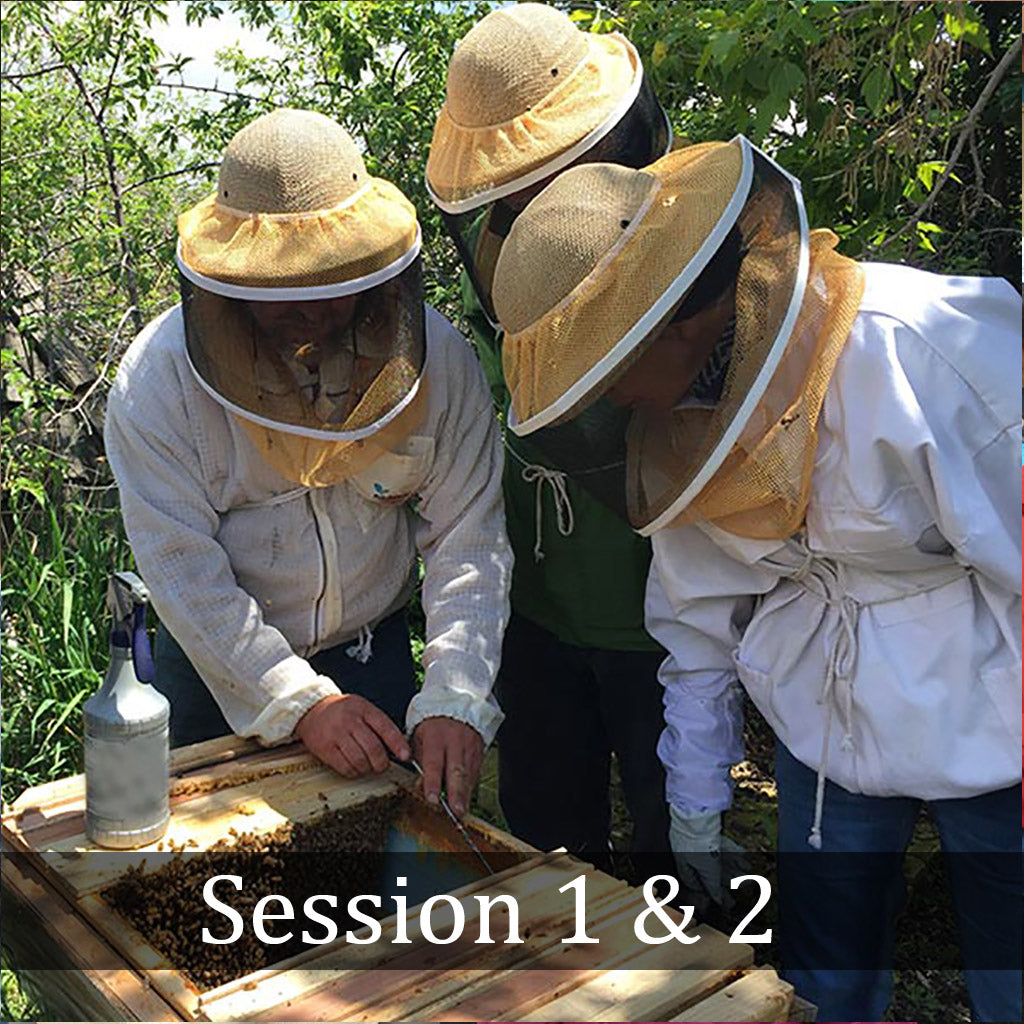 Natural Beekeeping Classes -Session 1 & 2- Boulder, CO