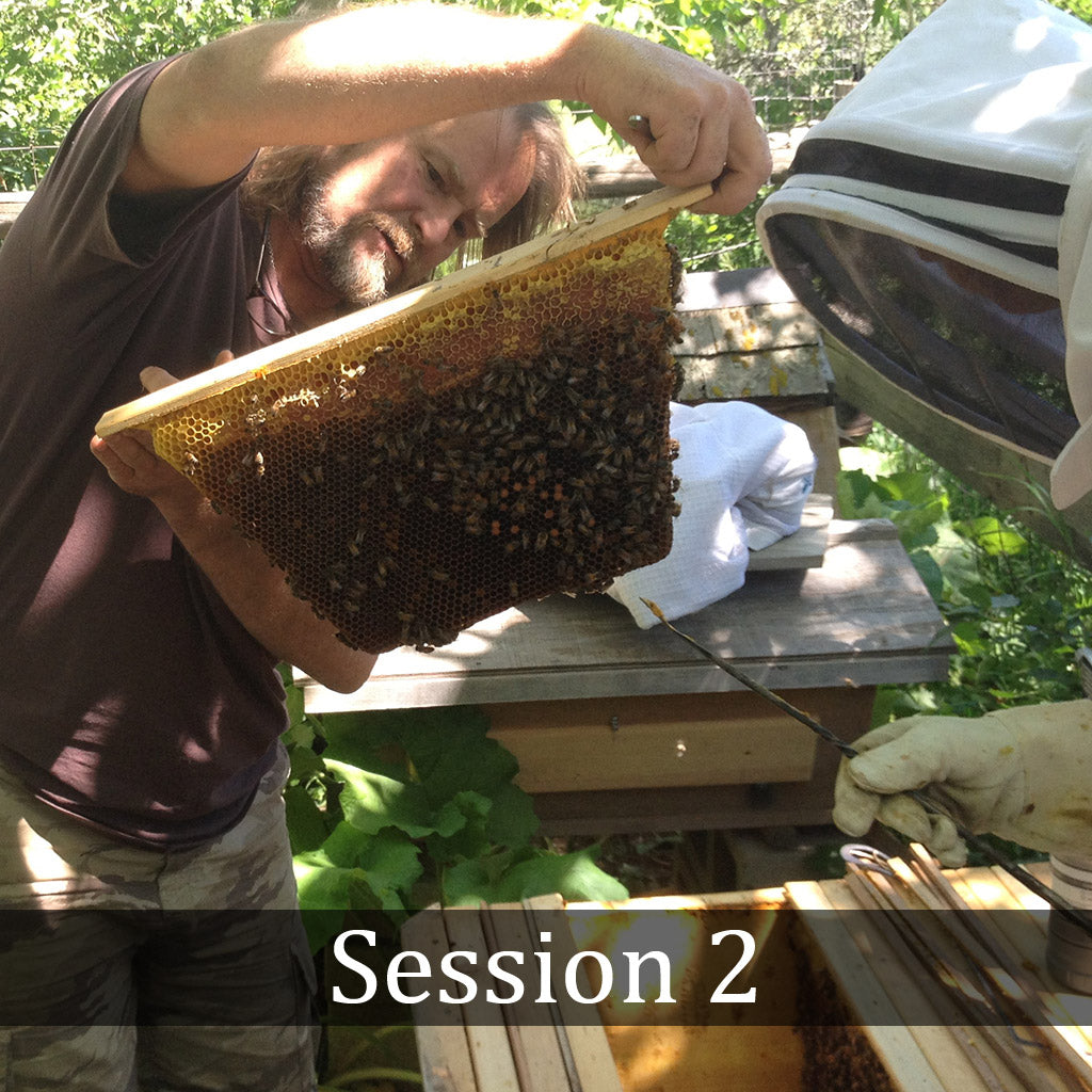 Natural Beekeeping Classes - Session 2 Colorado