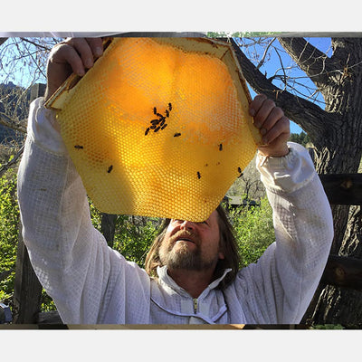 Corwin Bell with a Cathedral Hive hexagonal honeycomb