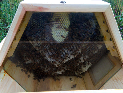 Glass Falseback - Top Bar Hive
