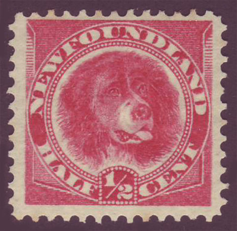 NF0562.1 Newfoundland        Newfoundland # 57 F-VF MH       Newfoundland dog       (orange red - 1896)                                       ;