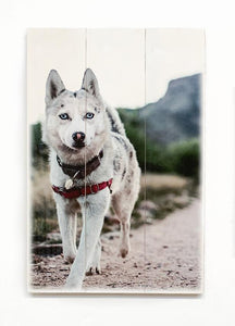 Rustic Wood Pet Portrait