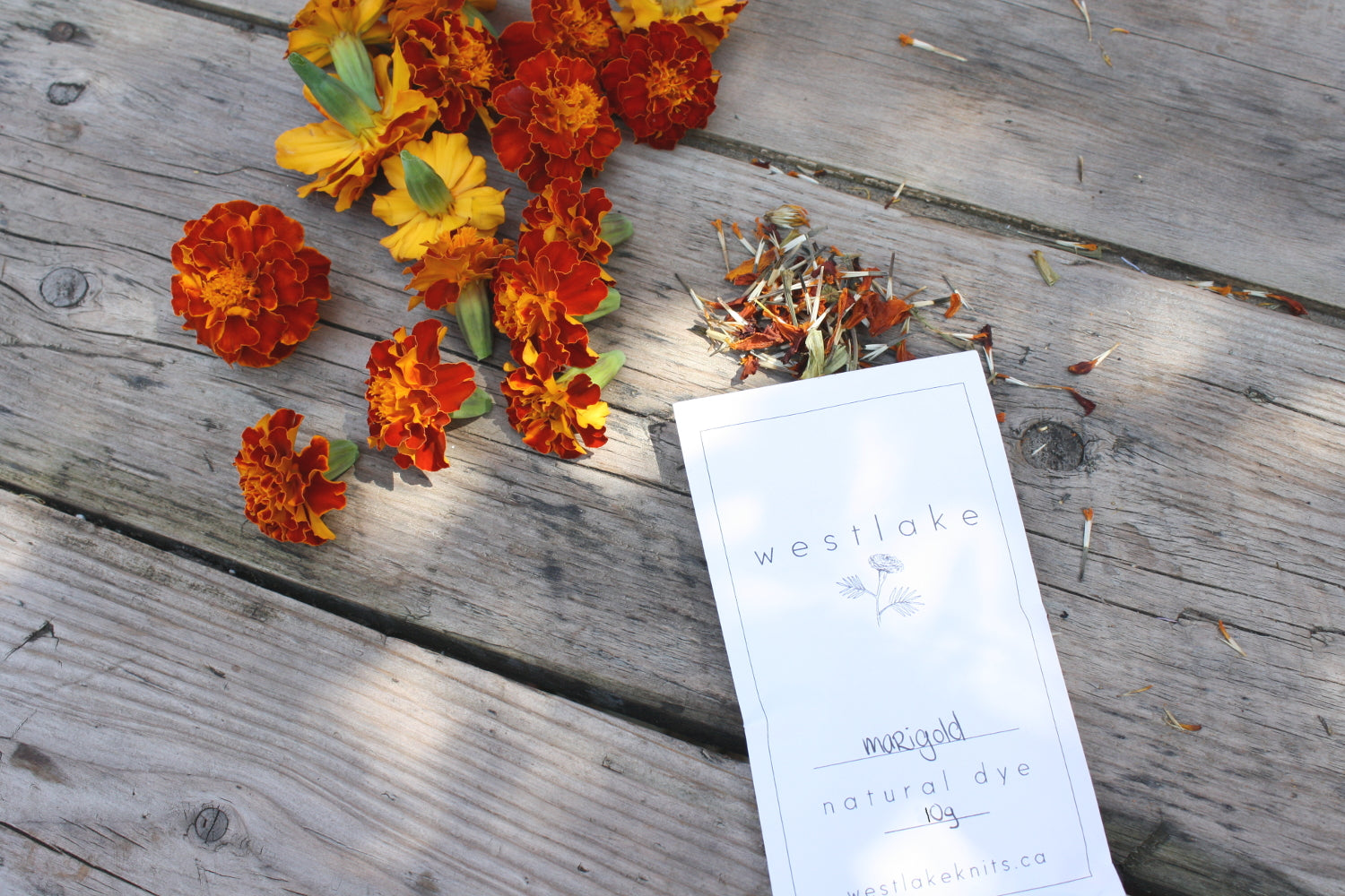 Organic Marigold Natural Dye for dyeing rich yellows and olives, grown in Toronto