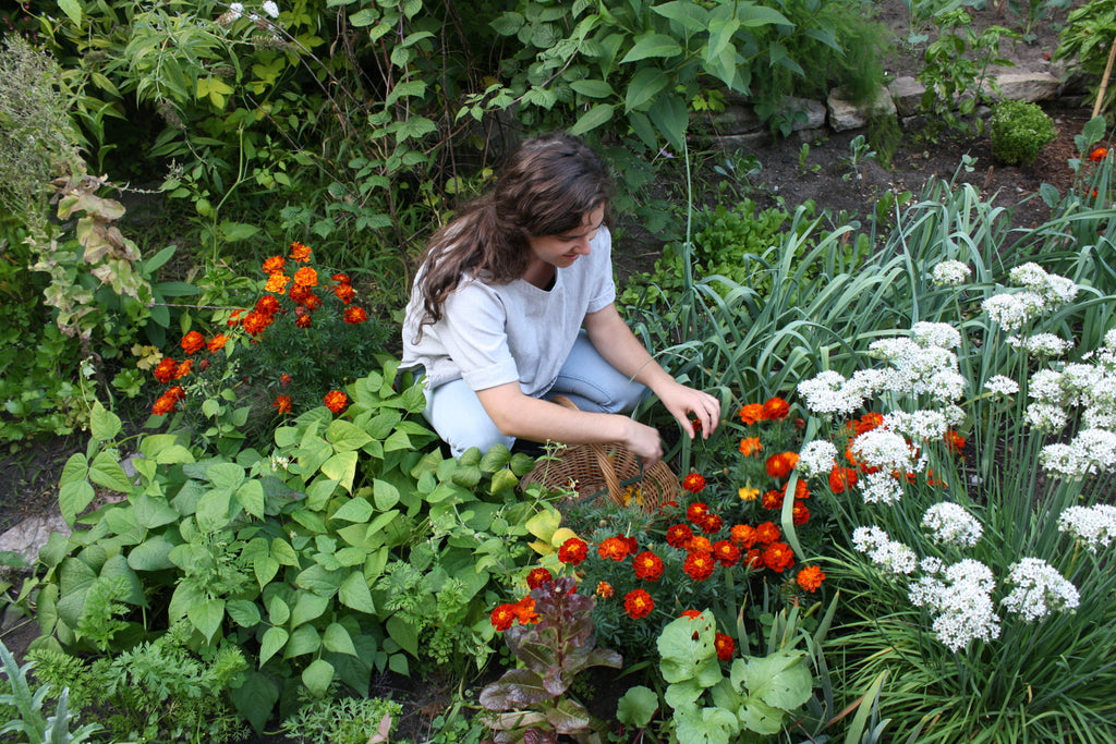 Growing a Dye Garden Workshop June 3