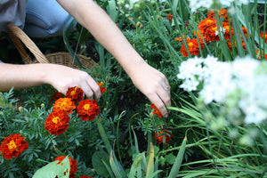 Growing a Dye Garden Workshop September 16