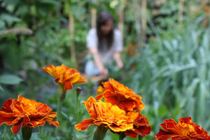 Growing a Dye Garden Workshop- NEW DATES COMING SOON