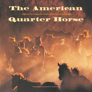 The American Quarter Horse DRS