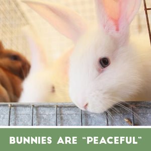 "Bunnies are ""Peaceful"""