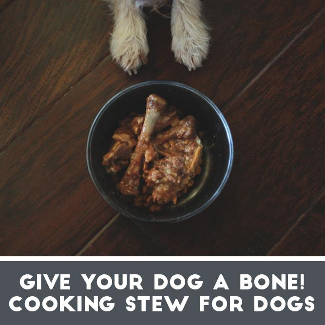 Give Your Dog a Bone! Making Homemade Dog Food From Kitchen Scraps