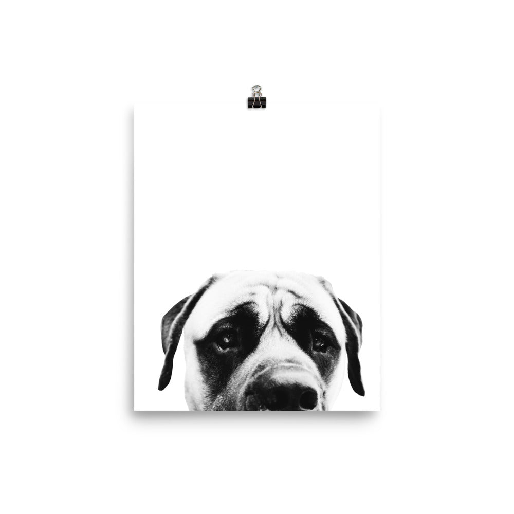 Mastiff Dog Matte Print - conkberry