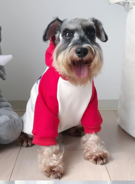 Teddy Schnauzer Puppy Winter Hoodie - The Hoodie Store