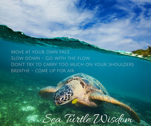 Lessons from the Sea Turtle – Sea Turtle Honu Wisdom