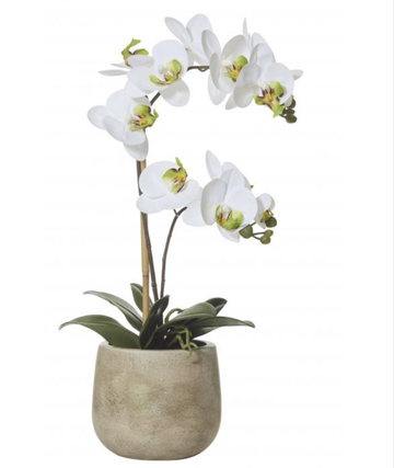 Butterfly Orchid-Brown Pot