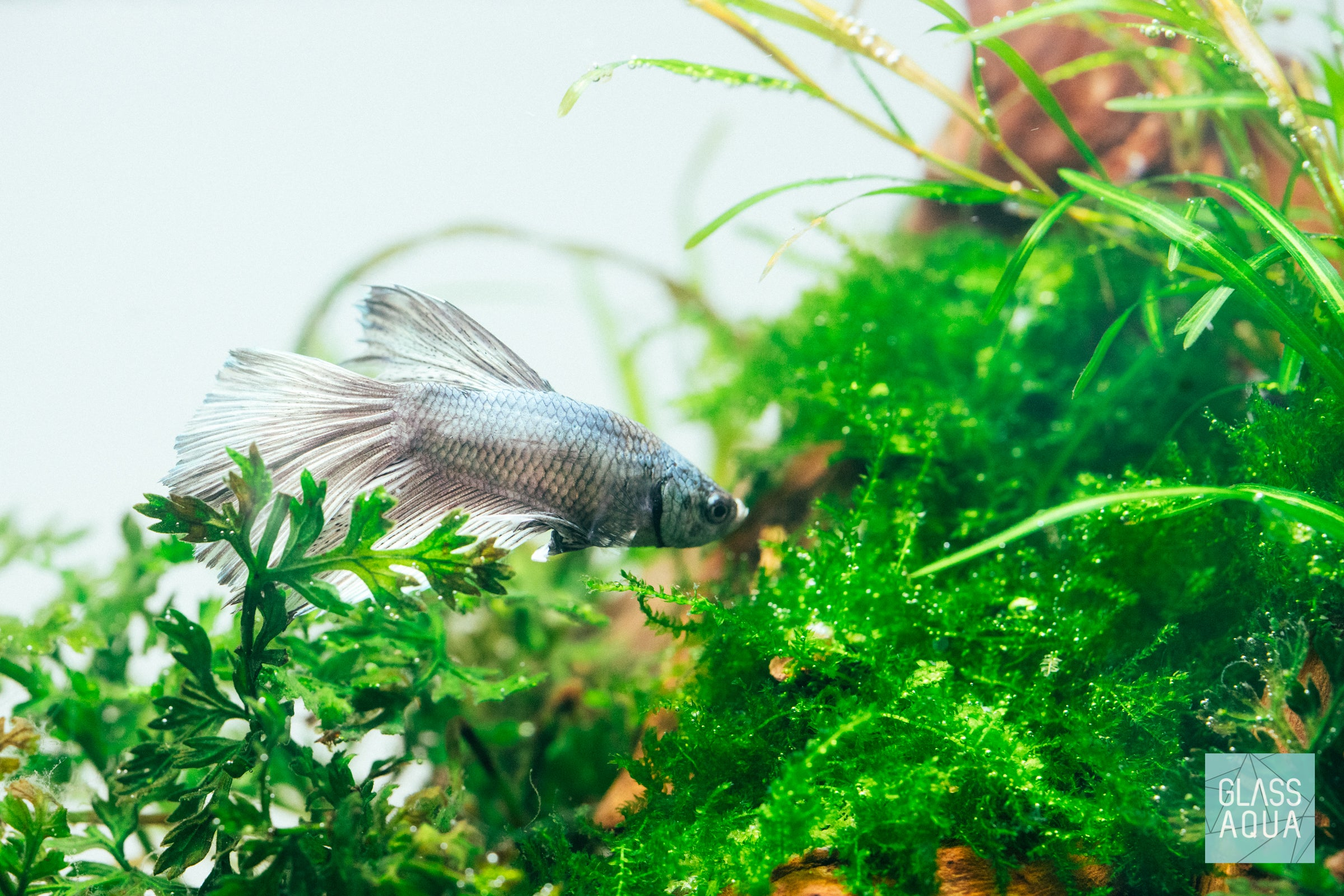 Ultum Nature Systems Planted Nano Betta Tank